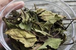 White Tea Selection – Australian Tea Masters