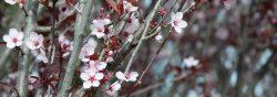 Tree Nursery Perth, Advanced Trees – Ellenby Tree Farm
