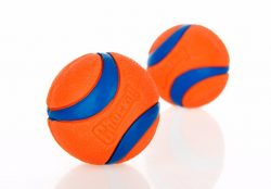 Orange Rubber Ball for Dog – My Pet