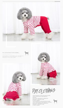 Pet Casual Clothing for Dog & Cat – My Pet
